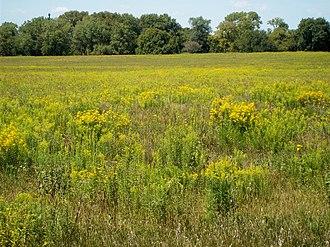 Midewin National Tallgrass Prairie - Image: Midewin 3