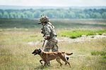 Military Working Dogs undergo Live Fire Tactical Training. MOD 45160282.jpg