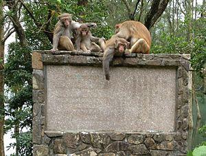 Wilson Trail - Wilson Trail, Section 7, rhesus macaques atop a Wilson Trail memorial monument