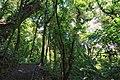 Monteverde Reserve Costa Rica 14.jpg