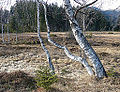 Moorlandschaft am Pass Thurn 01.JPG