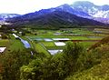 Morning View of Hanalei Rice Fields, Princeville, Kauai, June 2009 - panoramio.jpg