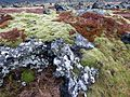 Mosses , vegetation - Flickr - gailhampshire.jpg