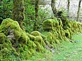 Mossy Wall - geograph.org.uk - 981874.jpg