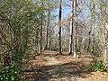 Mount Locust Slave Cemetery (3252516308).jpg