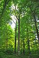 Myshkovytskyi-dub-6584.jpg
