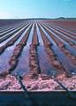 NRCSAZ84007 - Arizona (507)(NRCS Photo Gallery).jpg