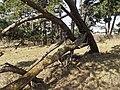 Nationaal Park Kennemerland (27498956918).jpg