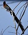 National Aviary (13020022835).jpg