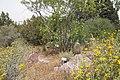 National Botanic Garden of Israel 17.jpg