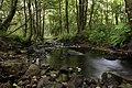Nature reserve Niva Olšového potoka in summer 2014 (11).JPG