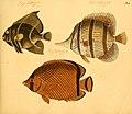 Naturgeschichte in Bildern mit erläuterndem Text (Taf. XLI) (6059210732).jpg