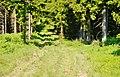 Naturpark Rothaargebirge - panoramio (5).jpg