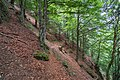 Naturschutzgebiet Feldberg (Black Forest) - Alpiner Steig am Feldberg - Bild 07.jpg