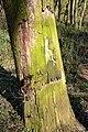 Naturschutzgebiet Haseder Busch - Im Haseder Busch (37).jpg