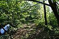 Naturschutzgebiet Mittleres Innerstetal mit Kanstein - Innerste bei Grasdorf (11).JPG