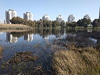 Netanya Winter pond from north.jpg