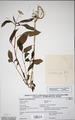 Neuchatel Herbarium Types NEU000113010.tiff