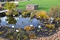 Neuer Botanischer Garten Göttingen - Aquatic plants.jpg