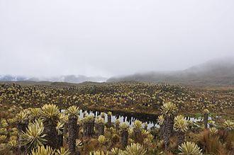 Los Nevados National Natural Park - Image: Nevado del Ruiz Tolima Páramo
