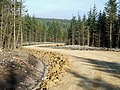 New Forest Track - geograph.org.uk - 577078.jpg