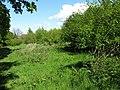 New broadleaved woodland at Kirkton - geograph.org.uk - 1316352.jpg