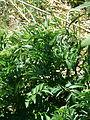 Non identified plant.JPG