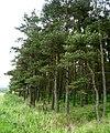 North Piersknowe Plantation - geograph.org.uk - 190985.jpg