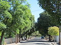 OIC parkside street 3.jpg