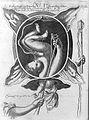 Obstetrical plate from Siegemund's Die konigl. Wellcome L0012911.jpg