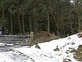 Offa's Dyke at Springhill Farm - geograph.org.uk - 1198037.jpg