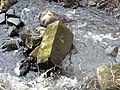Old Mills site & Hapland Mill lade, Dunlop, East Ayrshire. Glazert Burn. Detail of worked stone.jpg