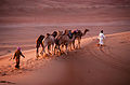 Oman 2010 wahiba sands nomads.jpg