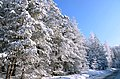 On our route to Niederthai at 25 Februari 2013 there where marvellous snowcoverings at the trees along the road. - panoramio.jpg