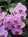 Orchid0002.jpg