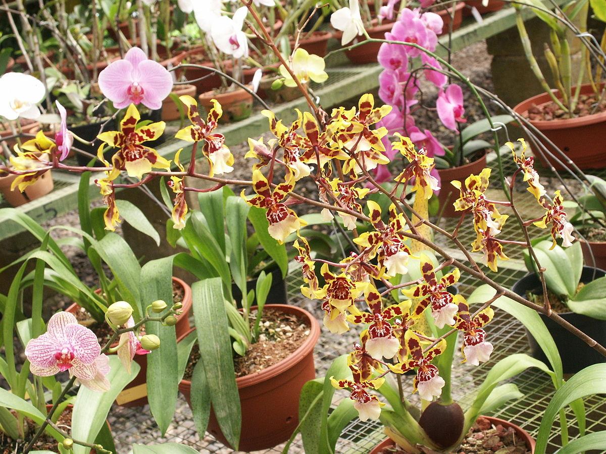 Lankester Botanical Garden Wikipedia
