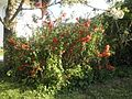 Ornamental Plant 2.jpg