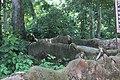 Osun Sacred Grove forest Osogbo.jpg