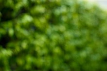 Out of Focus Green Backgounds-16.jpg