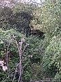 Overgrown bridleway - geograph.org.uk - 60979.jpg