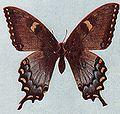 Papillon inconnu Mexique 5.jpg