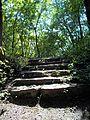 Parc-nature du Bois-de-l-ile-Bizard 80.jpg