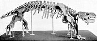 Pareiasaurus skeleton.jpg