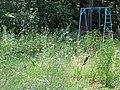 Park Scene - Levada District - Poltava - Ukraine (42920320345).jpg