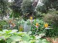 Park auf dem Gelände der Universidade dos Açores (14007920985).jpg