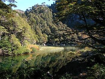 Parque Nacional Heurquehue 4.jpg