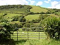 Pasture in Cwm Nant Carfan - geograph.org.uk - 520652.jpg
