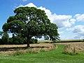 Path From Croxall Church - geograph.org.uk - 1394534.jpg