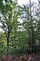 Peklo u Nového Města nad Metují, Kozí hřbet 11.JPG