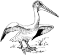 Pelican 3 (PSF).png